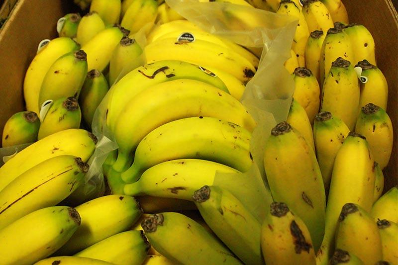 banana madeira boa